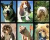 Kiekvienas žmogus ras sau tinkamą šunų veislę.