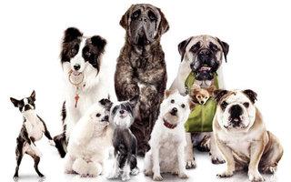 """Kiekvienas žmogus turi pasistengti pasirinkti """"savą"""" šuns veislę."""