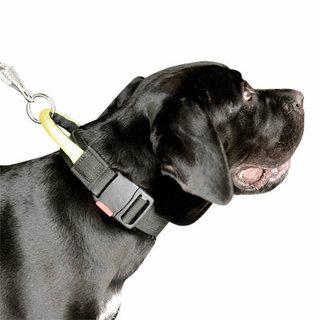 Visi antkakliai šunims, turi savo paskirtį.