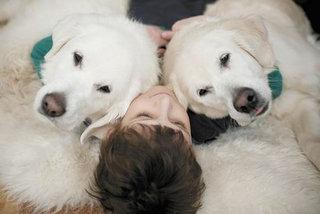 Taisyklių žinojimas - palengvins šuniuko priežiūrą.