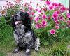 Šunų alergiją gali sukelti keletas priežasčių, o dėl niežulio dažniausiai kalti kelių rūšių sukėlėjai.