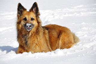 Ne tik laukiniai gyvūnai, bet ir naminiai taip pat kenčia nuo žiemos šalčio.