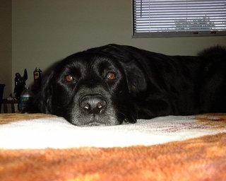 Sergantis šuo elgiasi kitaip nei sveikas. Kartais iš karto pastebimi įvairūs išoriniai ligos požymiai.