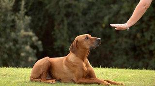 Kas beauklėtų šuniuką, visi privalo taikyti tas pačias taisykles.