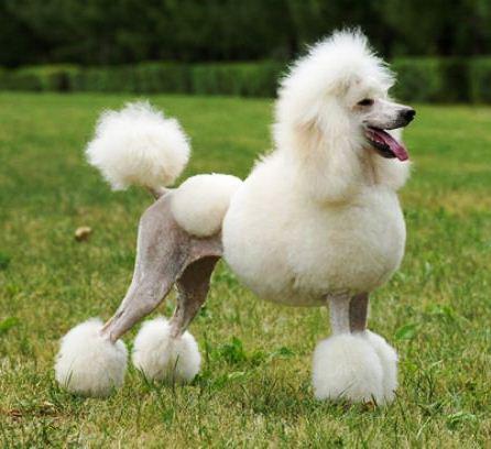 Lobos Dog Grooming
