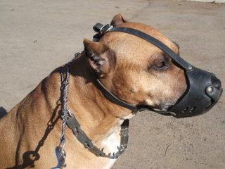 Antsnukis reikalingas ne tik agresyviam šuniui.