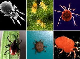 Viena iš apsaugos priemonių nuo parazitų - maudynės.