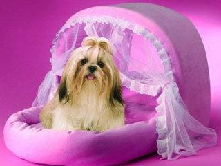 Šuns guolis turi būti jaukus, šiltas ir komfortiškas.