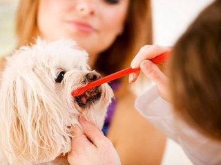 Teisinga šuns priežiūra - raktas į augintinio sveikatą.