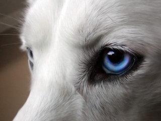 Beveik visi mano, kad šunims svarbesnė uoslė, nei regėjimas. Tai ne visai tiesa.