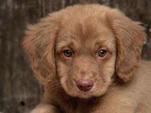 Šuo ėda išmatas? Atpratinti nuo tokio elgesio prireiks daug kantrybės.