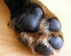 Šunų letenų pagalvėlės labai atsparios, tačiau ir joms reikia priežiūros.