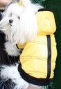 CROCI Honeybee striukė šuniui