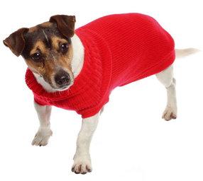 CROCI Siviglia megztinis šuniui