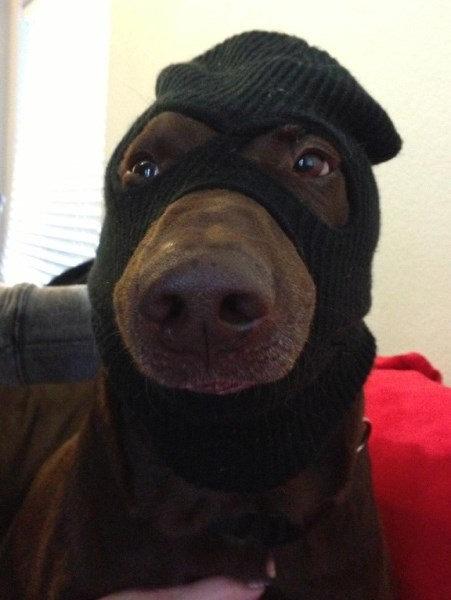 Šuo su kostiumu