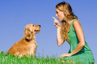 Dėl žalingų šunų įpročių, dažnai kalti patys žmonės.