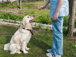 Šuns dresavimas - ne tik įdomus, bet ir reikalaujantis nemažai šeimininko pastangų.