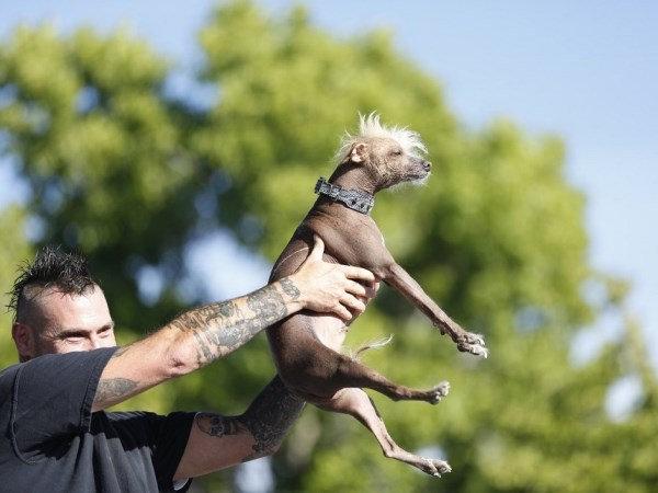 Bjauriausias šuo pasaulyje