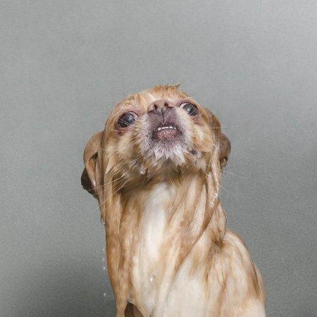 Šlapias šuo