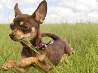 Rekomenduojama kasdien tikrinti šuns kailį ir radus erkių kuo - greičiau jas pašalinti.